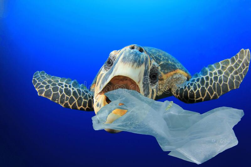 Plastic pollutes the sea with Turtle stock images