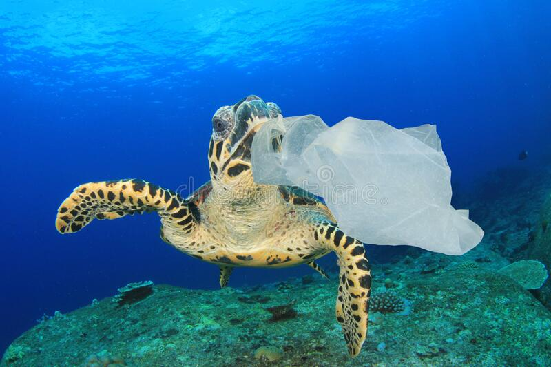 Plastic pollutes the sea with Turtle stock photography
