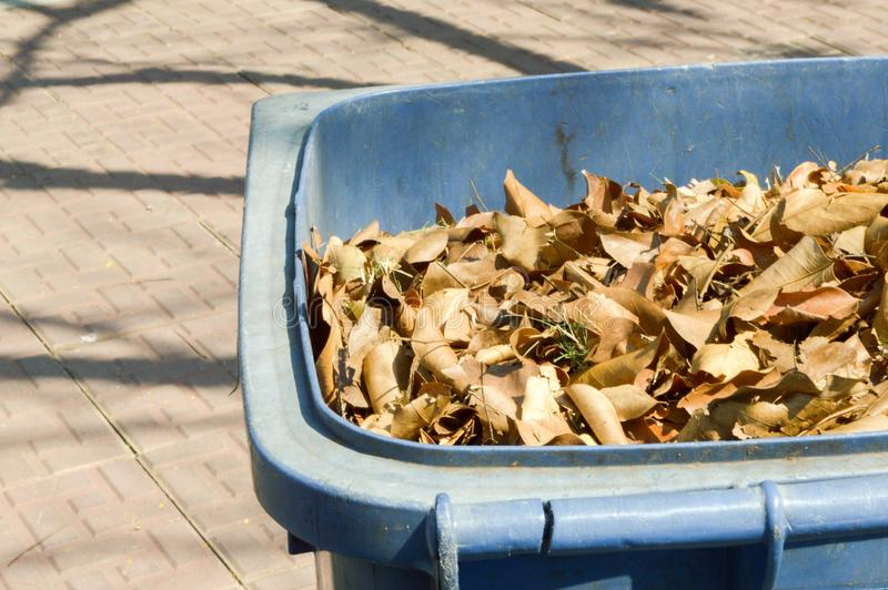 Plastic bin. Dry leaves on plastic bin stock image