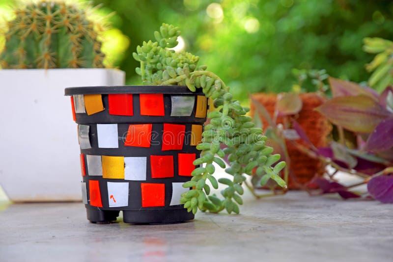 Plastic Bottle Mosaic Colorful Multicolor Planter Beautiful  Plastic Planter stock photo