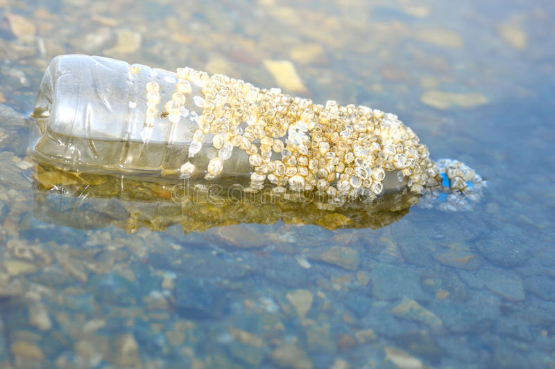 Plastic bottle in the sea, acquired cockleshells. Empty plastic bottle in the sea, acquired sea cockleshells stock photo