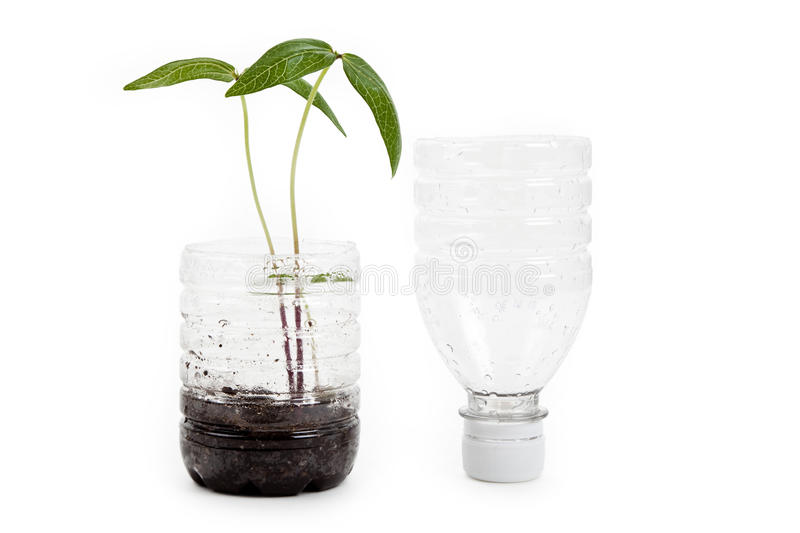 Plastic bottle and Sprout stock image