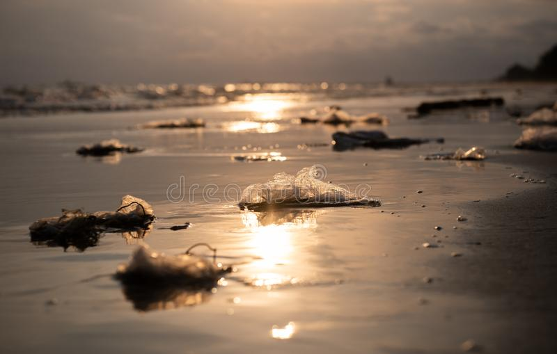 Plastic garbage on the beach stock image