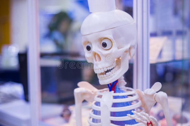 Plastic human skeleton. At technology exhibition. Anatomy and medical concept stock photo