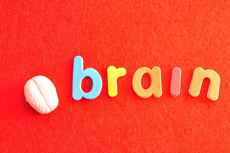 A plastic model of a human brain with the word brain royalty free stock images