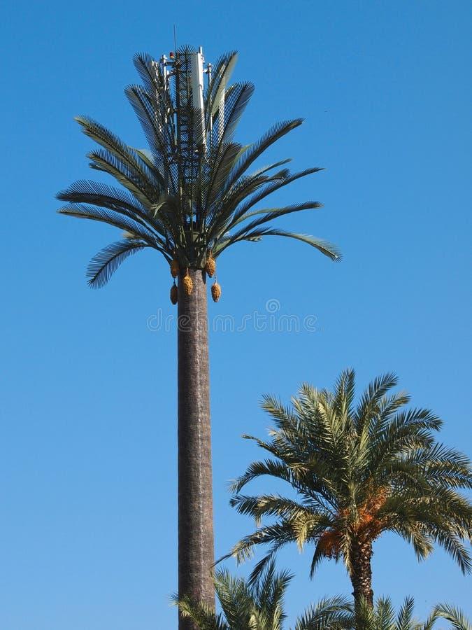 Plastic palm stock afbeeldingen