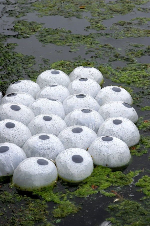Plastic Plant Life Pods stock photos