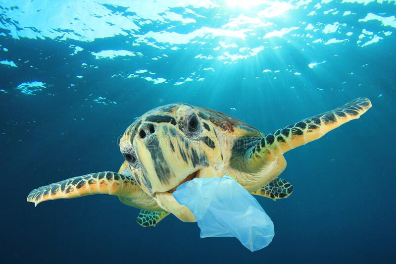 Plastic pollutes the sea with Turtle stock image