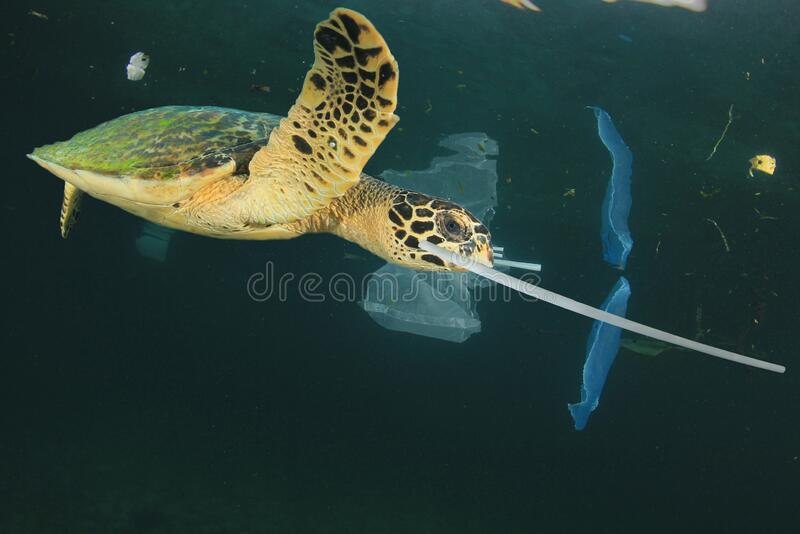 Plastic pollutes the sea with Turtle stock photo