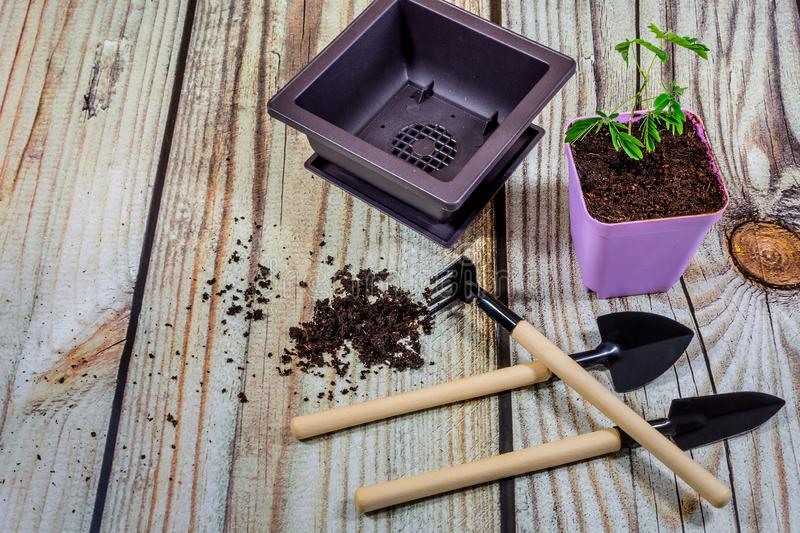 Plastic pots, and Gardening tools. Gardening tools dominate the background of wooden boards with copy space around the products. Border with place for text stock photography