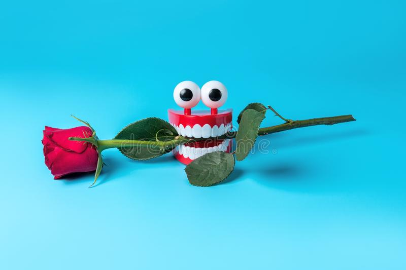 Plastic toy teeth with rose flower on blue background. Abstract minimal composition royalty free stock image