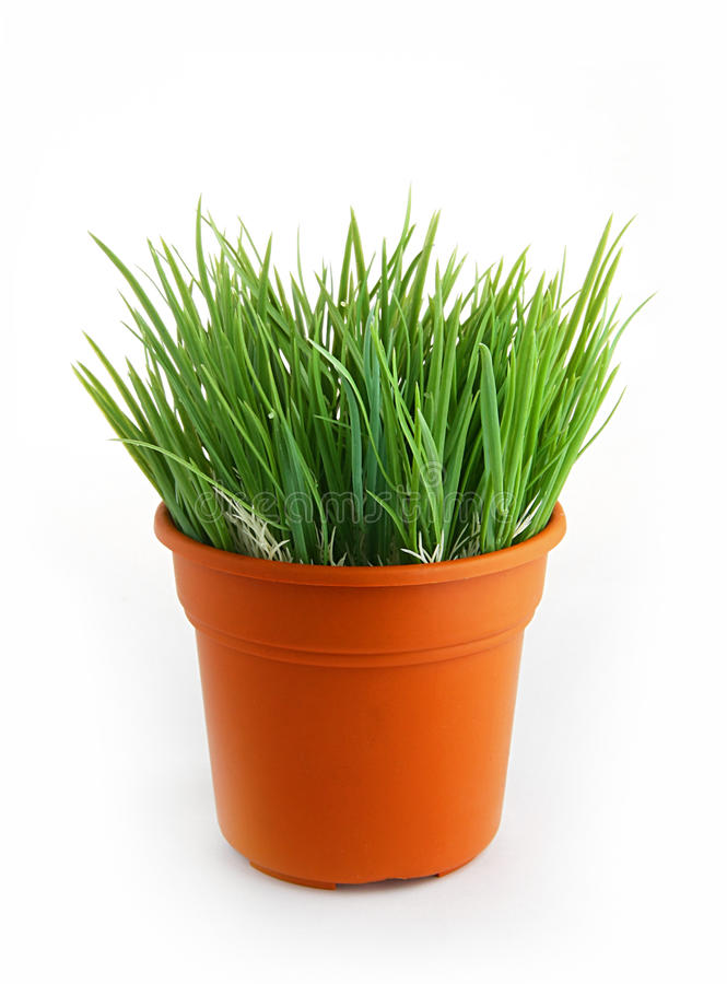 Plastic wheat grass. On pot royalty free stock photos