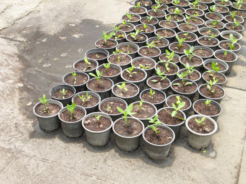 Plastica delle verdure saltate per la piantagione di alberi nel giardino immagine stock libera da diritti