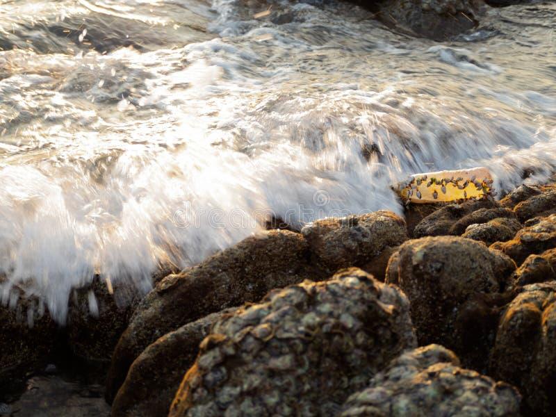 Plastikabfallflaschen, die in das Meer entleert worden sind, haben Rankenfußkrebse lizenzfreies stockfoto