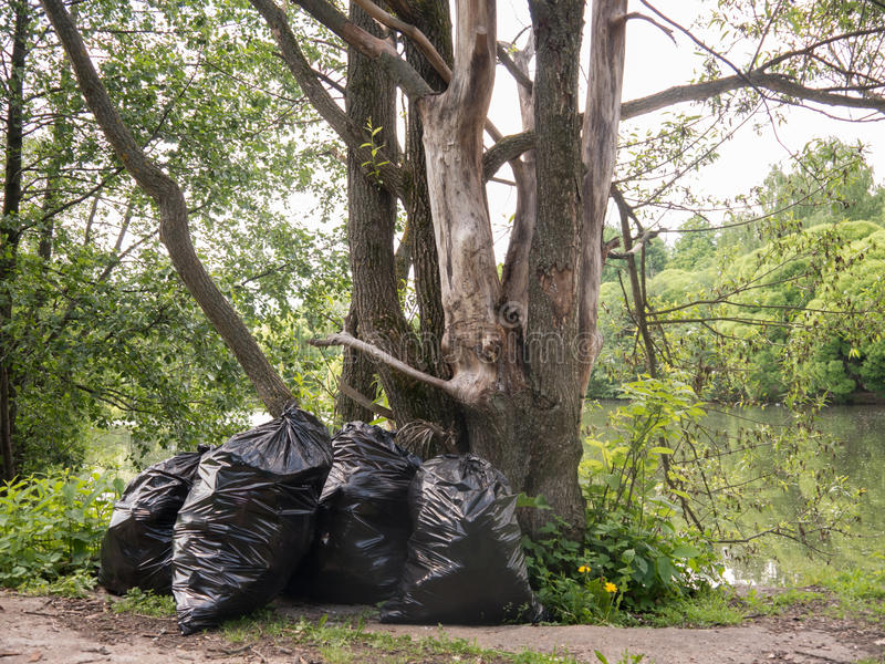 Plastikabfalltaschen unter Baum des Waldes nahe kleinem Pfund lizenzfreies stockbild
