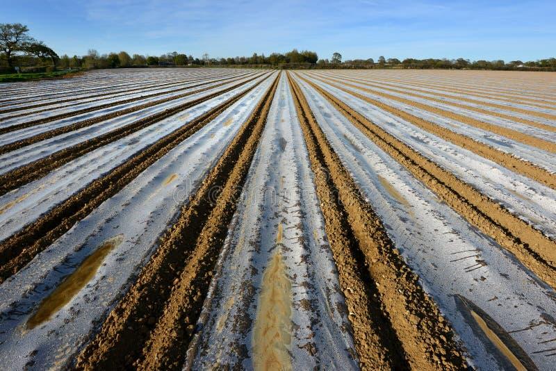 Plastikowi paski na kukurydzy polu, uk zdjęcia royalty free