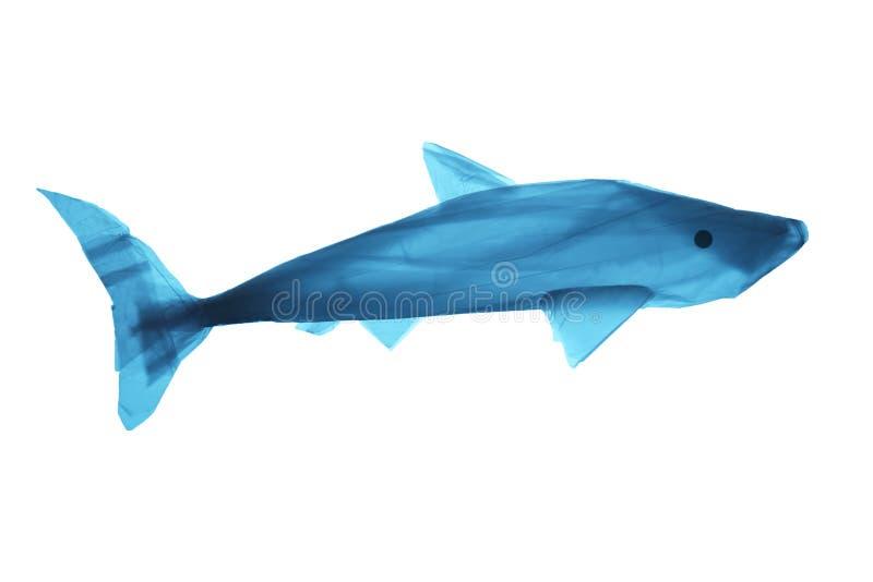 Plastikowy grat w morzu Zanieczyszczenie ?wiatowy oceanu odpady Sylwetka ryba od u?ywa? plastikowego worka fotografia stock