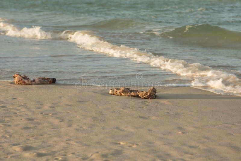 Plastikprodukte verstopfen Natur mehr und mehr Plastikflasche bedeckt in den Seerankenfußkrebsen und in Schwämme foulers und auf  lizenzfreie stockfotos