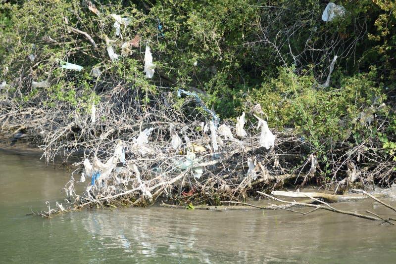 Plastpåsar och avfall som hänger i träd vid flodsäng royaltyfri fotografi