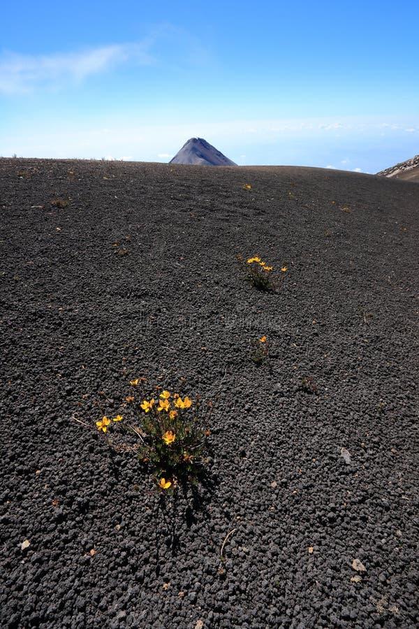 Platô da cimeira de Volcan Acatenango perto de Antígua, Guatemala fotos de stock royalty free