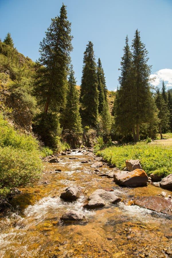 Platô do Assy na montanha de Tien Shan em Almaty, Cazaquistão, Ásia no verão imagens de stock