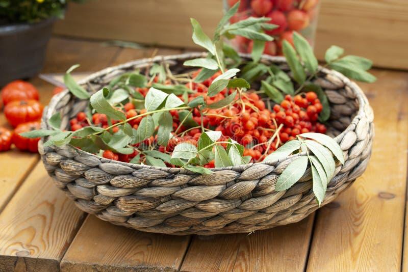 Plat en osier avec les baies de sorbe rouges mûres avec des feuilles Moissonnez le festival, groupes de sorbe photos stock
