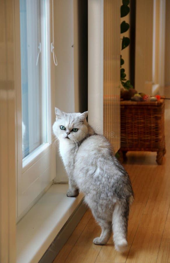 Plat et chat bien projetés modernes photo stock