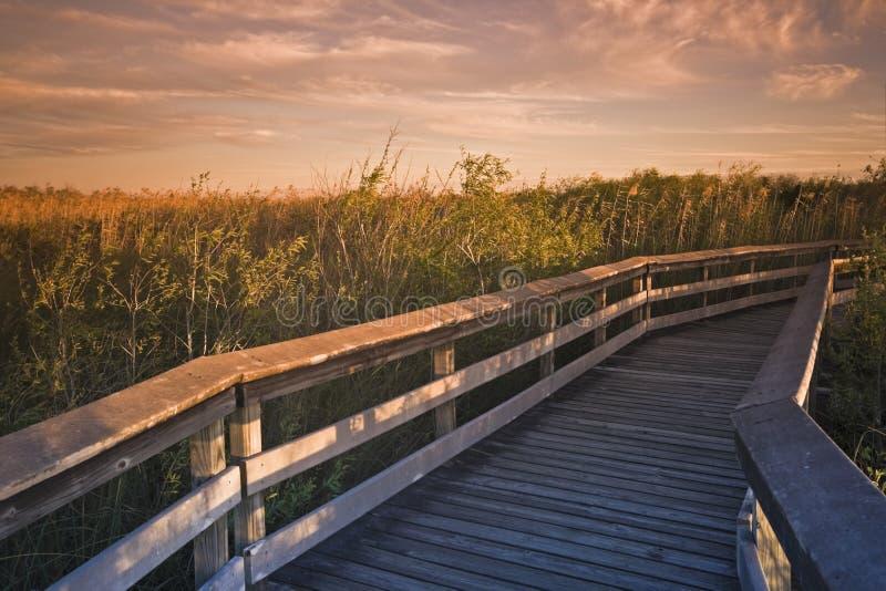 Plataforma no parque nacional dos marismas fotografia de stock royalty free