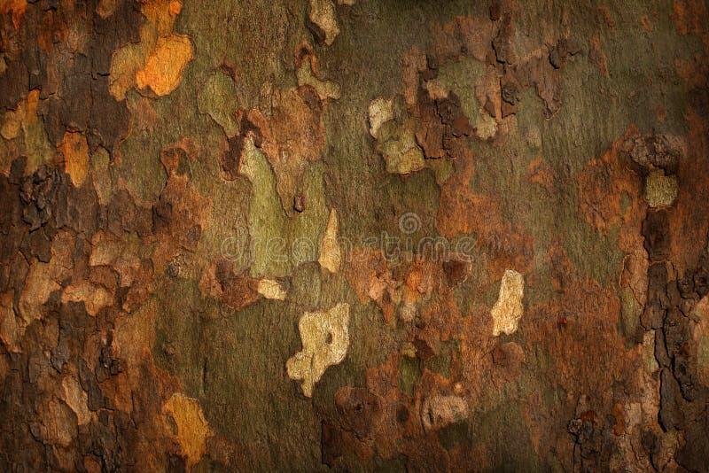 Platan tree bark background royalty free stock photos