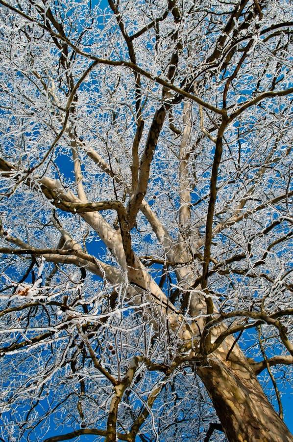 Download Platanus stock image. Image of autumn, outdoors, garden - 23659953