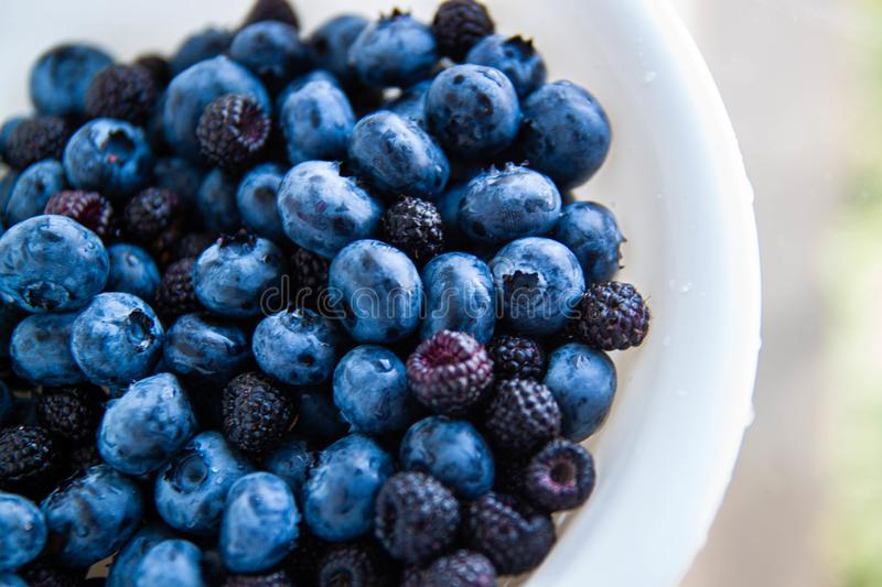 Plate with berries black blackberries. Fruits berries on the table. royalty free stock photography