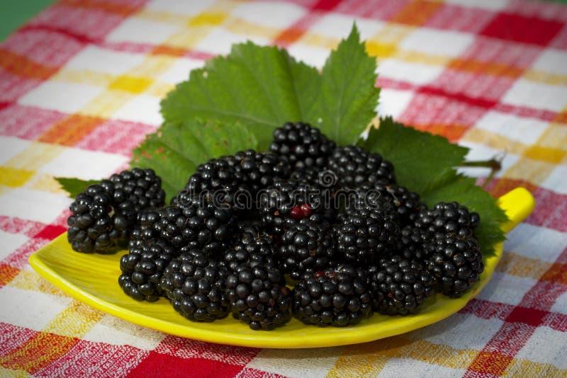Plate of blackberries stock photos