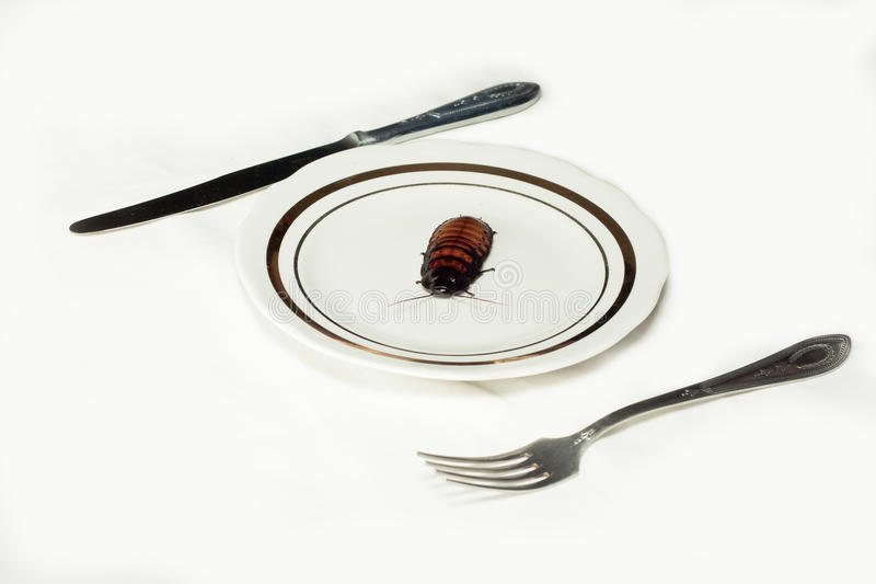 Download Plate With Cockroach On White Stock Photo - Image: 29634642