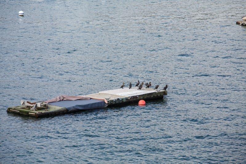 Plate-forme d'amarrage dans le port avec les oiseaux marins photos libres de droits