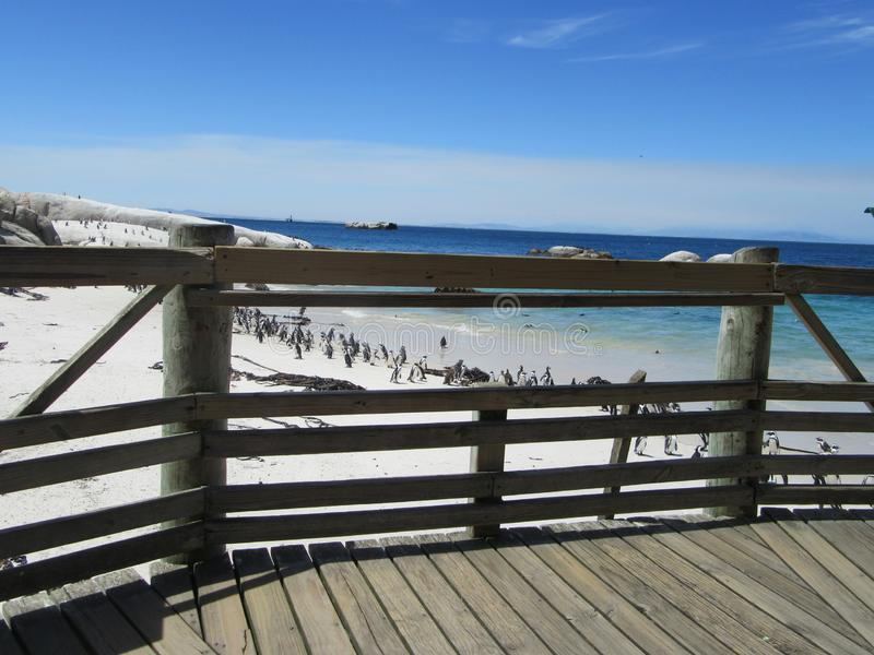 Plate-forme de vue d'enfants de sanctuaire de pingouin image stock