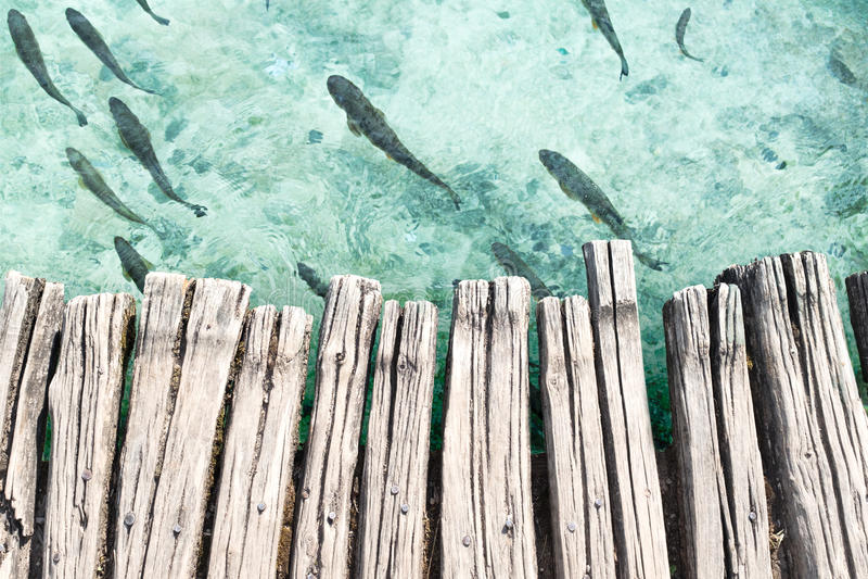 Plate-forme en bois au-dessus de l'eau claire de turquoise avec des poissons image stock