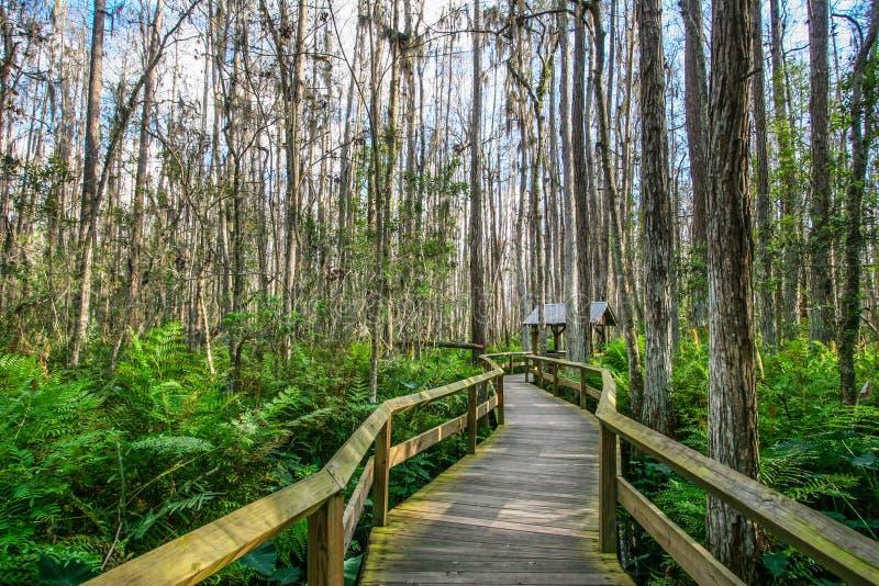 Plate-forme en bois dans les marais, la Floride photo libre de droits