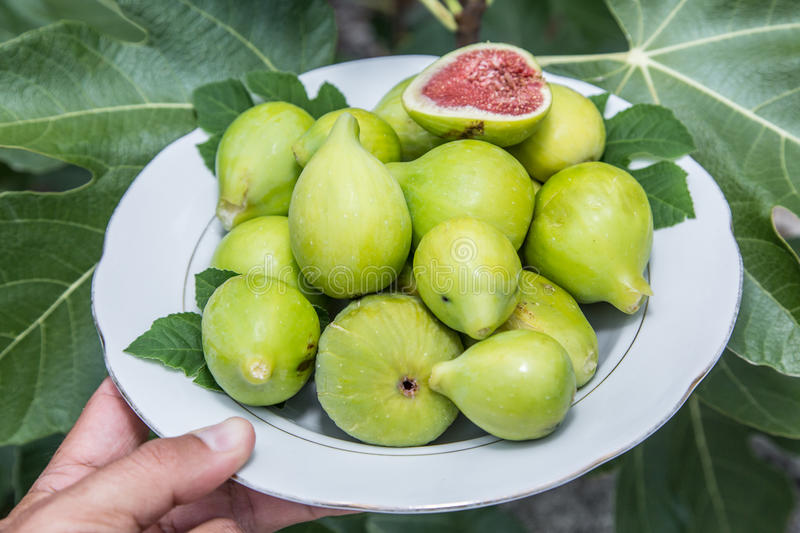 Plate full of ripe fig fruits. stock photos
