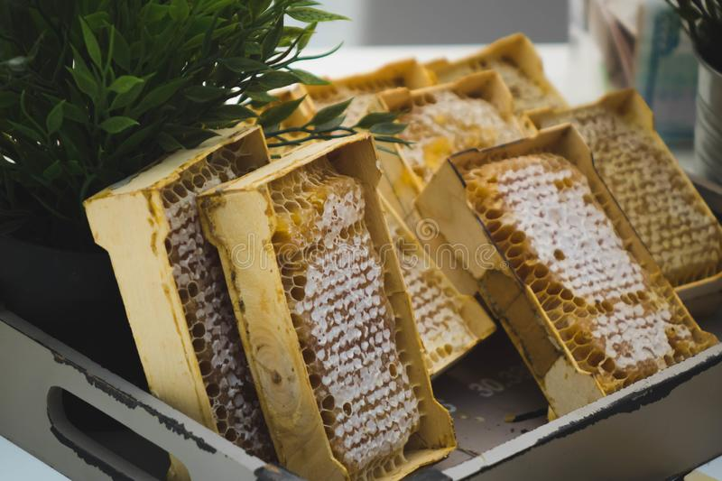 A plate of honeycombs sold at the fair. Background, bee, golden, sweet, food, healthy, natural, organic, yellow, closeup, delicious, dessert, fresh, ingredient stock images