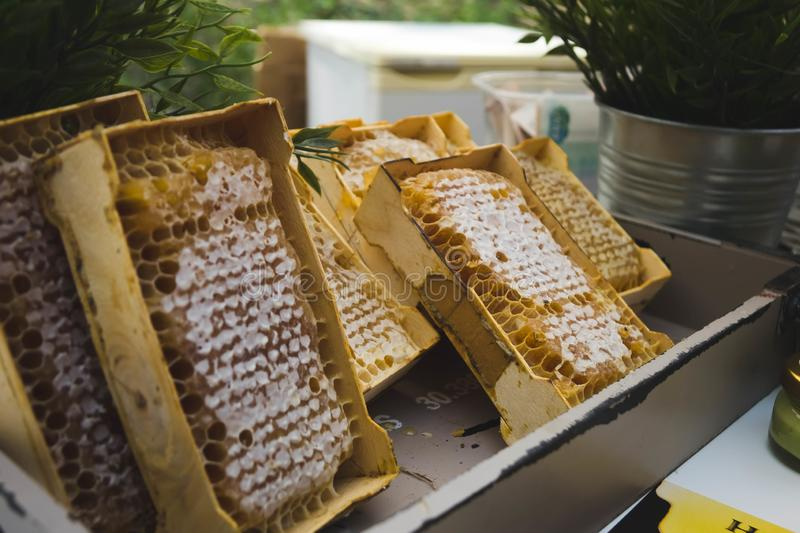 A plate of honeycombs sold at the fair. Background, bee, golden, sweet, food, healthy, natural, organic, yellow, closeup, delicious, dessert, fresh, ingredient stock photography