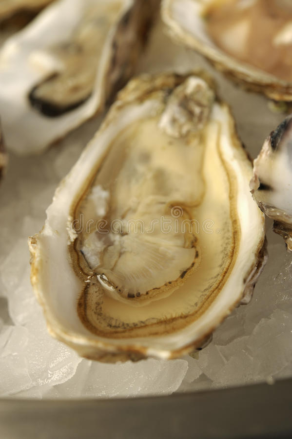 Download Plate of oysters stock photo. Image of seafood, gastronomy - 23708890