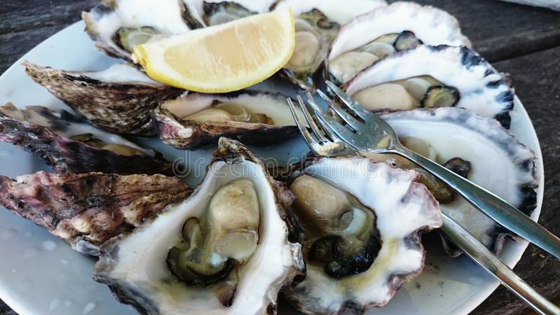 A plate of oysters royalty free stock images