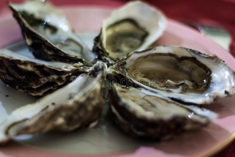Plate of oysters royalty free stock photos