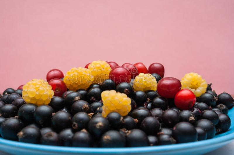 Plate with ripe berries yellow raspberry, black currant, red cherry on pink background with copy space. stock photography