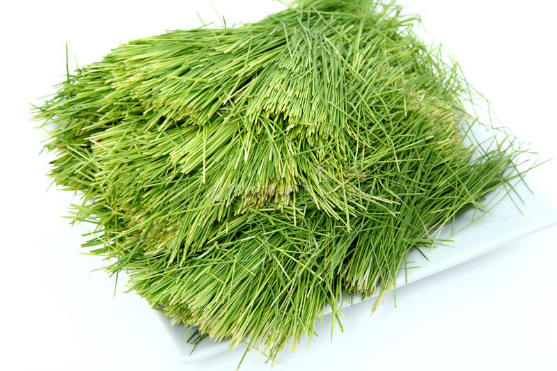 Plate of Wheatgrass. Plate of clean wheatgrass over white stock photography