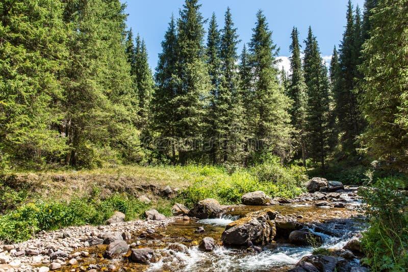 Plateau d'Assy en montagne de Tien Shan à Almaty, Kazakhstan, Asie à l'été photographie stock libre de droits