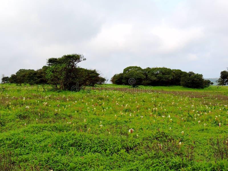 Plateau de Kaas - vallée des fleurs dans le maharashtra, Inde images stock