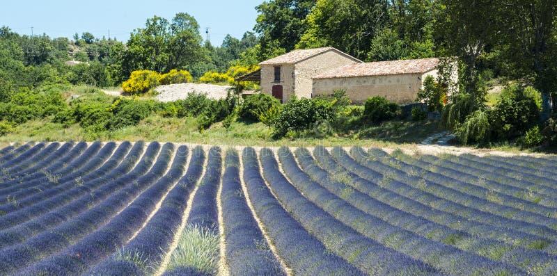 Plateau de Valensole (Προβηγκία), lavender στοκ εικόνες