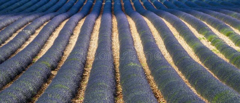Download Plateau De Valensole (Provence), Lavender Stock Photo - Image of france, plateau: 33200224