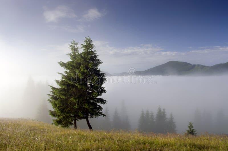 Plateau della montagna fotografie stock libere da diritti